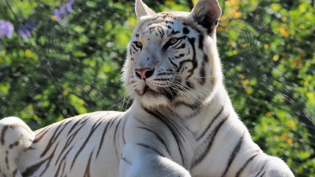 Passatempo ACP - Dia do Pai no Jardim Zoológico