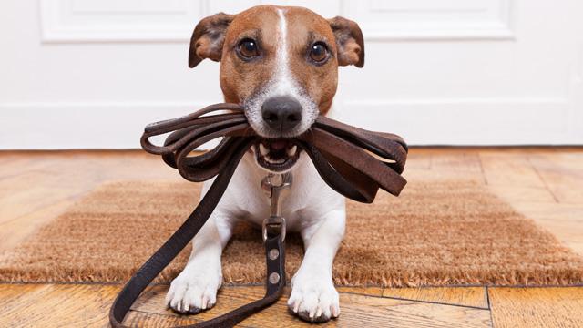 Cães sem trela só com licença especial
