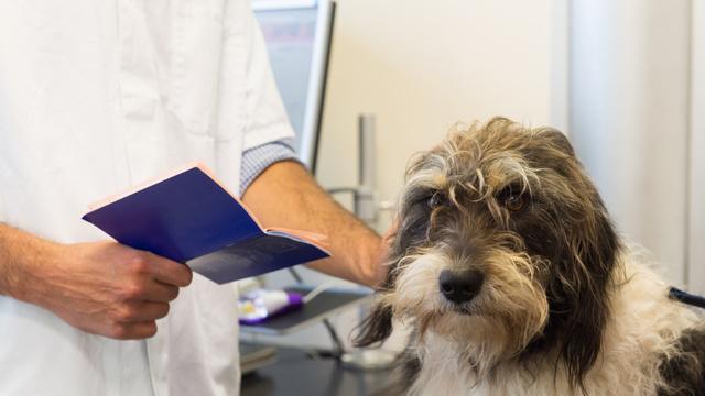 Registo e licença obrigatória para cães