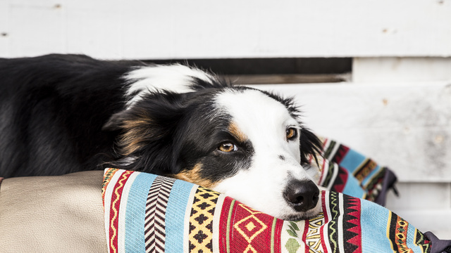 Descontos em serviços e gadgets para o seu Pet