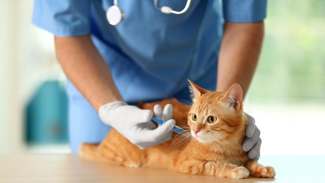 Vacinação de Animais