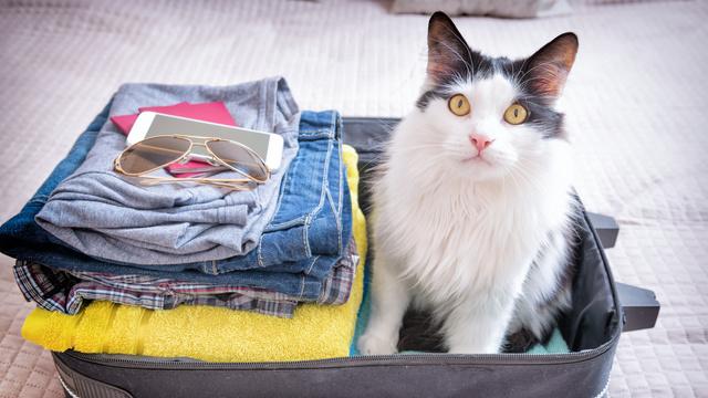 Viajar com o seu Pet