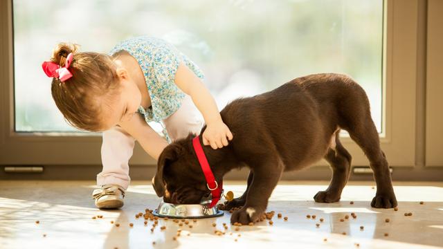 Alimentação de cães e gatos