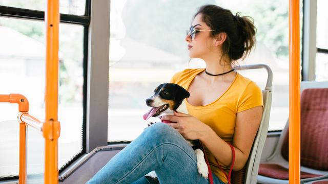 Animais nos transportes públicos